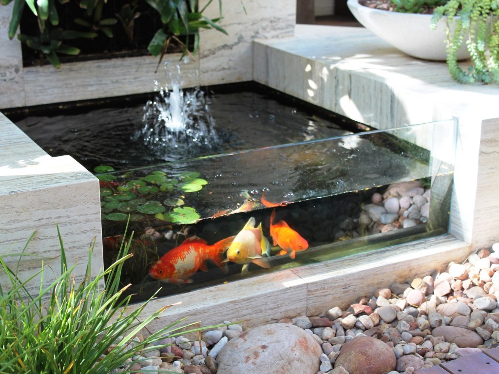 Mini_Fish_Pond_with_Transparent_Wall